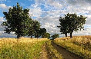 700x457_grass_path